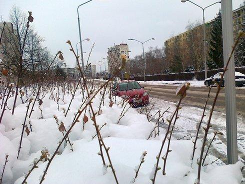 snehkrik_res.jpg