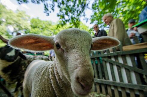 ovcaa.jpg