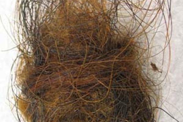 Mamutia srsť, z ktorej vedci izolovali vzorky DNA.