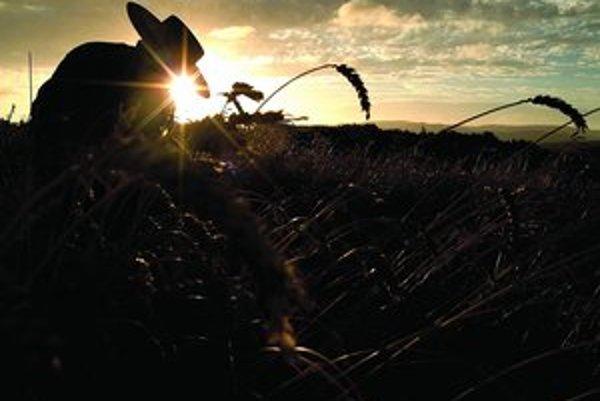 Pšenica má šesťkrát väčší genóm než človek.