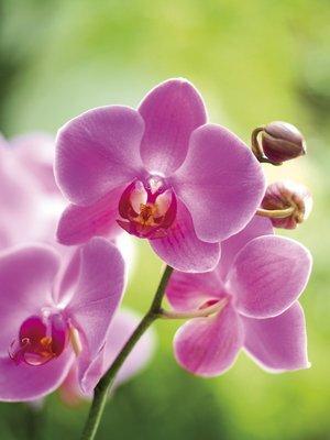 23_orchidee_01_4c_de_r517_res.jpg