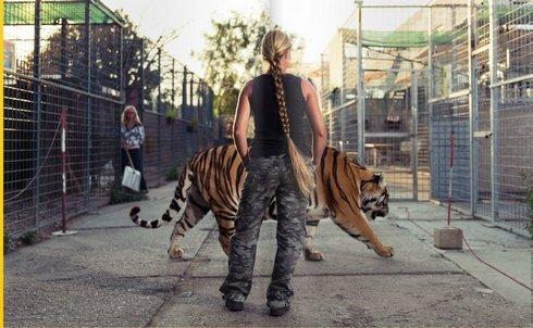 tiger_r346_res.jpg