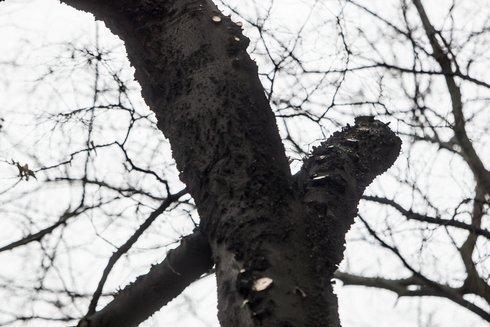 stromy2_res.jpg