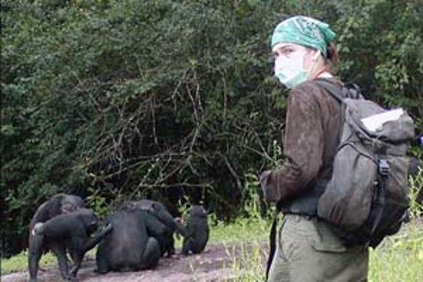 Christophe Boesch pri pozorovaní skupiny šimpanzov v Taiskom pralese.