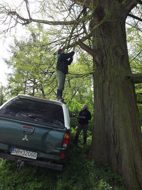 strom-vyska_r264_res.jpg