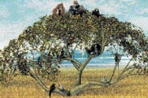 Na imaginárnom rodostrome primátov je menopauza častejšia nižšie a v strede; vrchol predstavovaný ľudoopmi (zľava) orangutanmi, gorilami a šimpanzmi ju nepozná. V ľudskom prípade zjavne vznikla sekundárne, k čomu prispela sociálna a kultúrna evolúcia.