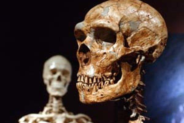 Rekonštrukcia kostry neandertálca (vpravo) a moderného cloveka v Múzeu dejín prírody v New Yorku.