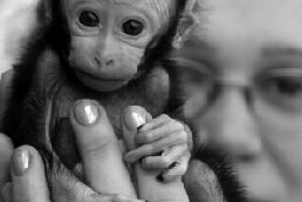 Mláďa makaka zo zoo v českom Dečíne.