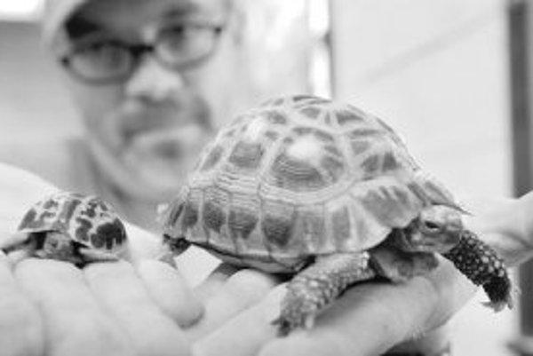 K živočíchom, ktoré majú problémy s prispôsobením na nové podmienky, patria aj niektoré druhy korytnačiek.