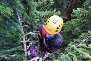 Horskí záchranár v korune stromu pod nohami paraglidingistu.