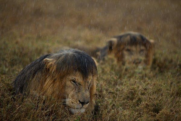 02-liongangland_31_r623_res.jpg