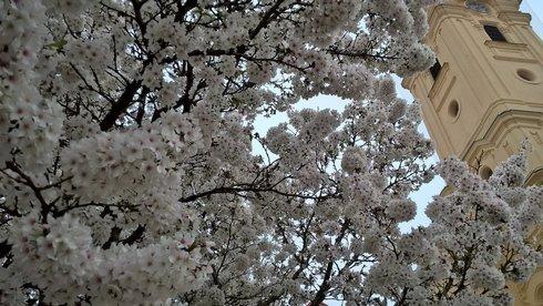 kvety-jar-botosova3_r8607_res.jpg