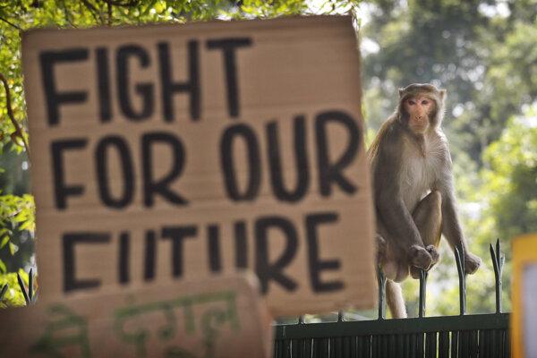Klimatický protest v Indii.
