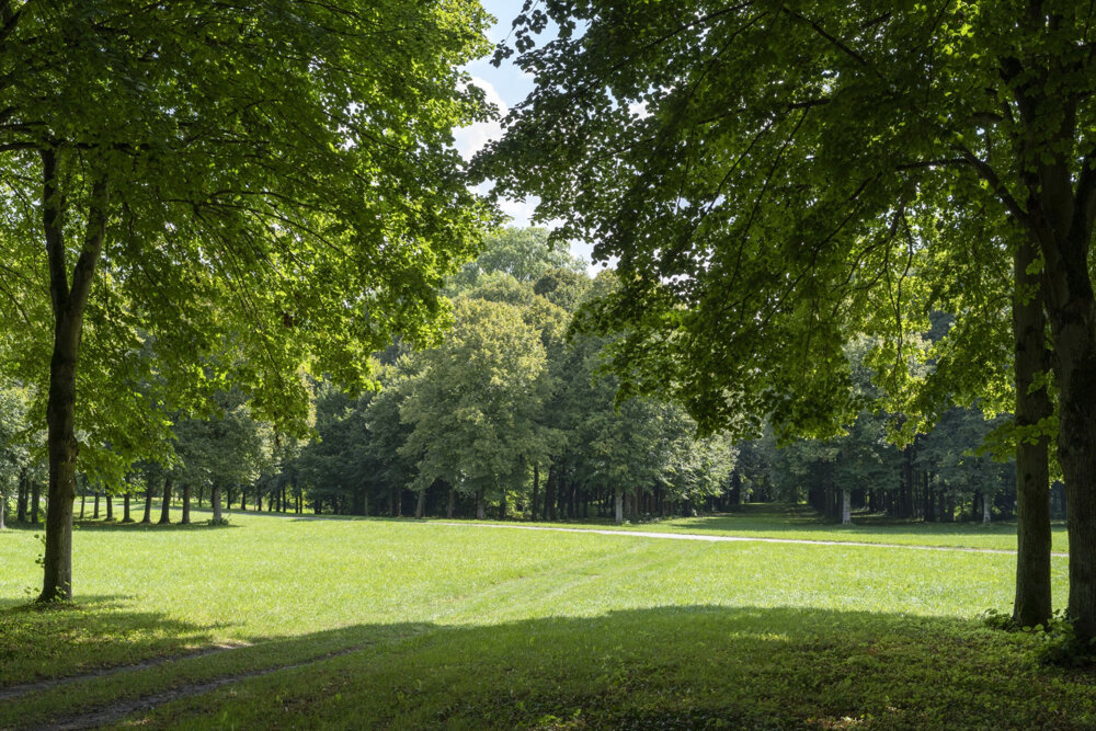 Niektoré stromy zasadené v záhradách Versaille neprežijú.