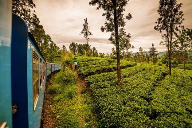 Cesta do Elly vedie cez čajovníkové plantáže, ktoré si vďaka nízkej rýchlosti vlaku môžete dosýta vychutnať