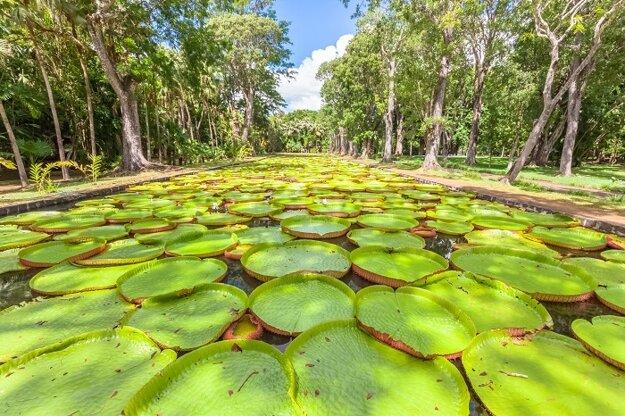 Pamplemousses botanická záhrada
