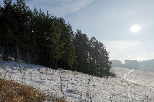 Pes bol zastrelený v lese v blízkosti farmy pri Bugľovciach.