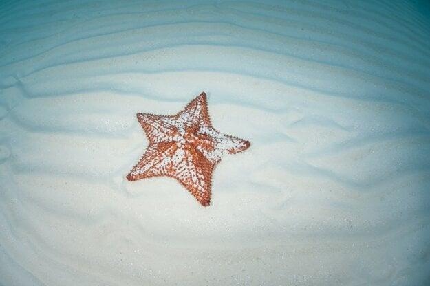 Hviezdice vo vodách Karibského mora