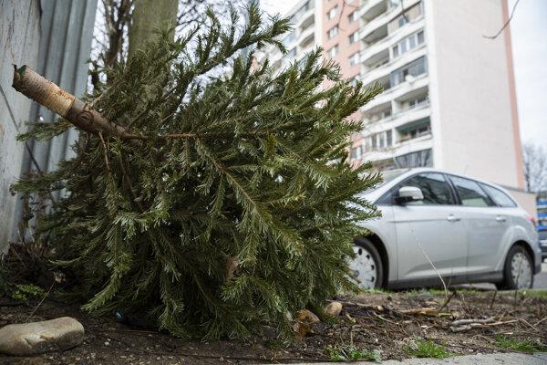 Mestá majú pravidlá, kde môžu ľudia vyhodiť živé vianočné stromčeky.