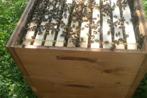 Včielky spokojne pracujú.