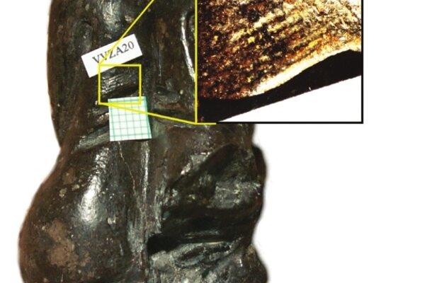 Otlačok sa nachádza vľavej časti chrbta.