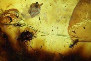 V ľavej časti jantáru sú dve muchy z čeľade Dolichopodidae, v pravej jeden pakomárik.