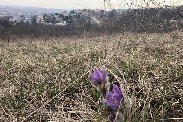 Vzácna lokalita sa nachádza len pár sto metrov od zastaveného územia Košíc.