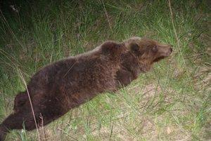 Háčik vo veľkom medveďa