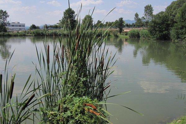 V lovnom revíri Lúkovica plávajú kapitálne kúsky. Po ulovení musia ryby späť do vody.