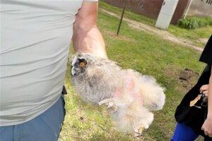 Z hniezda vypadlo v Martine sovie mláďa.