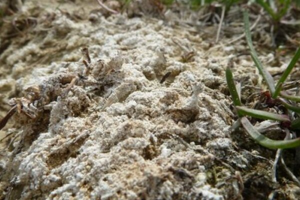 Vyzrážaná soľ v areáli Mostová.