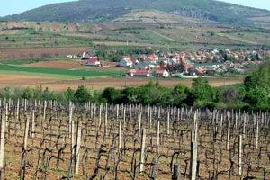 Tokajské vinohrady.