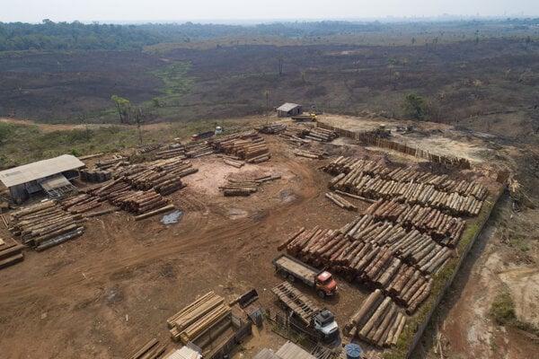 Aktivisti bojujú aj proti klčovaniu pralesov.
