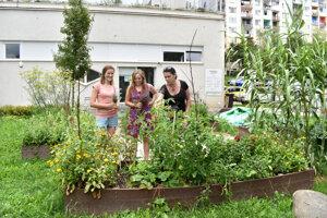 Záhrada nie je veľká, ale miesto v nej majú bylinky, ovocie aj zelenina.