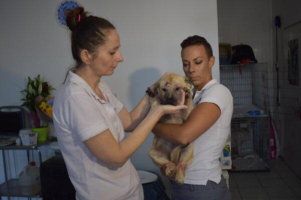 Veterinárka Lenka Lisá (vľavo) a Stanislava Rutrichová z OZ Pomáhaj a chráň so zachránenou Mandy.