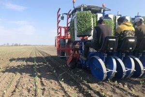Firma Agromačaj pestuje zemiaky, cibuľu, cesnak i koreňovú zeleninu.