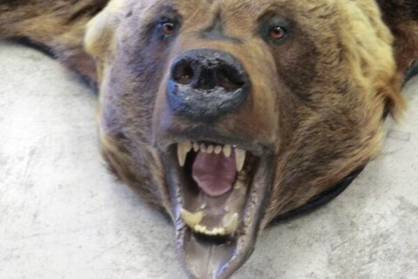 Koža z medveďa sa k príjemcovi nedostala.