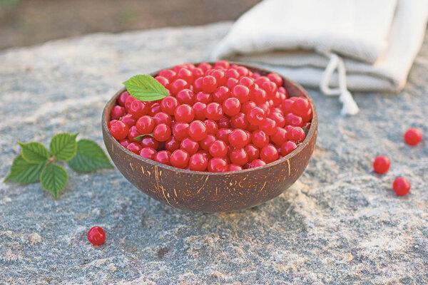 Sladkoplodá višňa plstnatá je tu pre tých, ktorým kyslejšia chuť klasických višní nevyhovuje. Aromatické plody sa hodia na priamy konzum i spracovanie.
