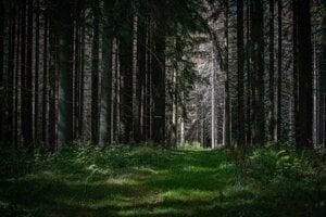 Veporské vrchy sú jednou z oblastí, kde na Slovensku miznú smreky. Nahradzuje ich hlavne buk, ktorý sa dokáže lepšie prispôsobiť novým podmienkam. Smrek oslabujú suchá a takýto strom je náchylnejší na lykožrútovú kalamitu.