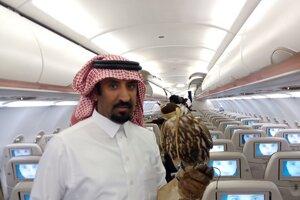 Sokol, jediné živé zviera, ktoré môže cestovať na palube aeroliniek.