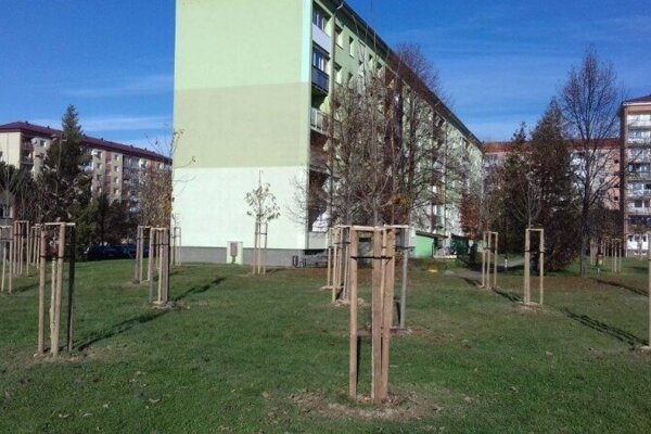 Vysadili nové stromy aj kríky.