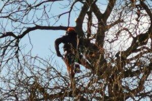 Ošeterovanie stromov.