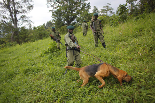 Strážcovia parku Virunga.