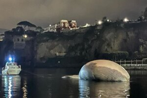 Telo mŕtvej veľryby pri Sorrente.