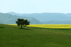 Investičné kúpy pozemkov nie sú na Slovensku také bežné ako v zahraničí.