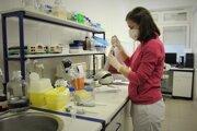 Pracovníčka laboratória Úradu verejného zdravotníctva pracuje na sekvenácii vzoriek pozitívnych na prítomnosť koronavírusu SARS-CoV-2.