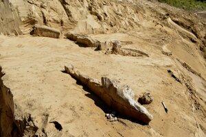 Objavené kosti v Banke patrili mamutovi srstnatému.