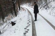 Stopy medveďa v Hrádockom revíri