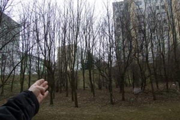 Povolený je aj výrub dvanástich stromov, ktoré rastú na svahu medzi Novomeského a Petzvalovou ulicou.