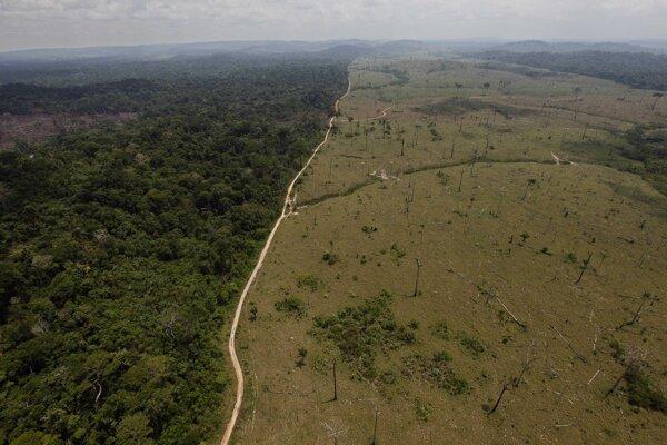 V roku 2019 sa odlesňovanie Amazonského pralesa zvýšilo štvornásobne.
